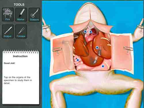 Dissection grenouille iPad